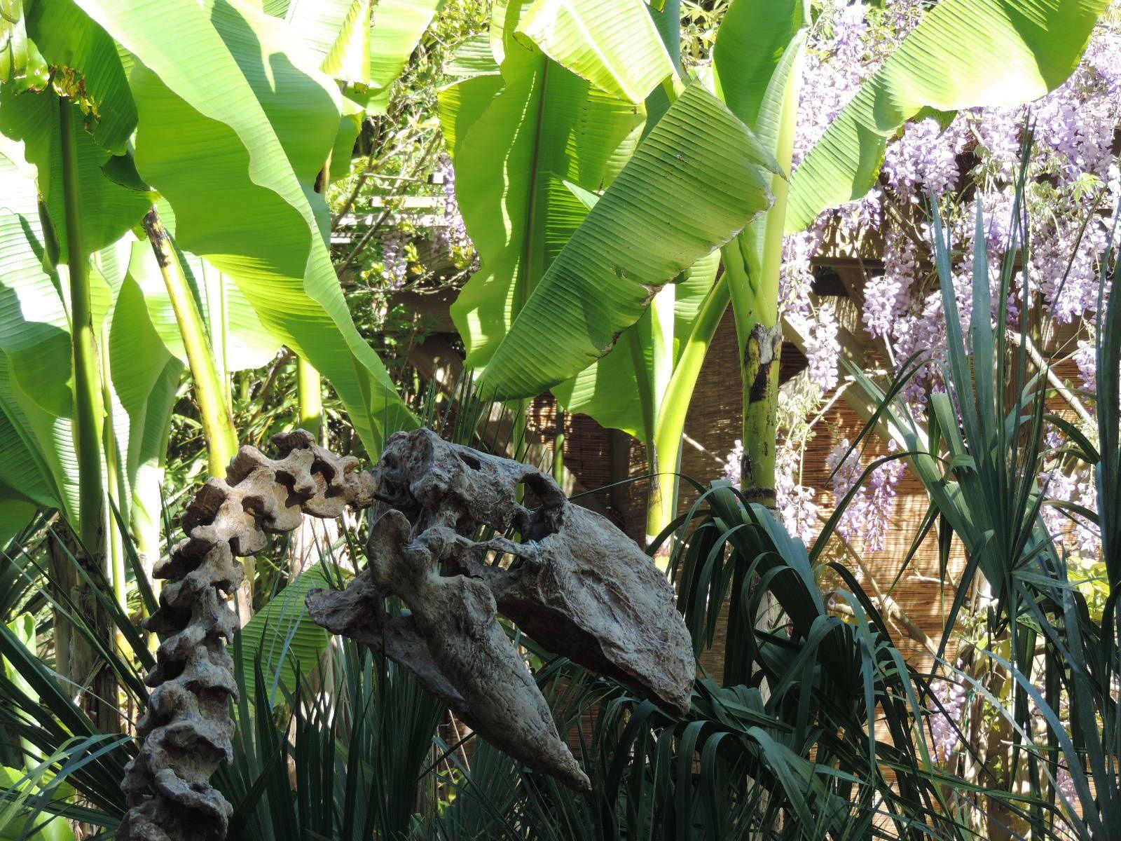 Quelques modèles et l'enclos des Utahraptor. Quand ils ont bien mangé, ils sont beaucoup plus dociles. Sinon .... ne restez pas dans les parages !