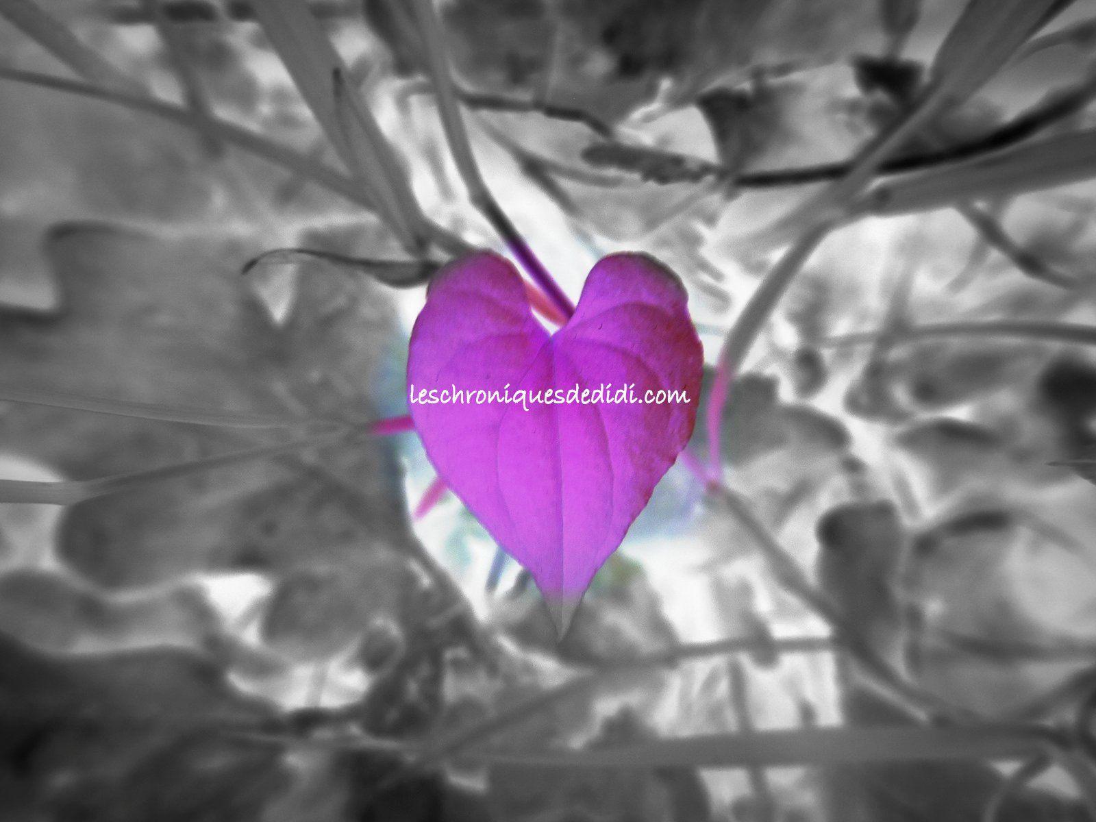 Je t'aime un peu, beaucoup, passionnément... à la Valentin