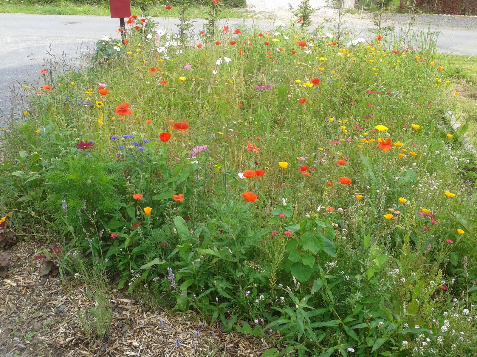 Ma MOB 49 et le jardin alors Nanne s Little Blog