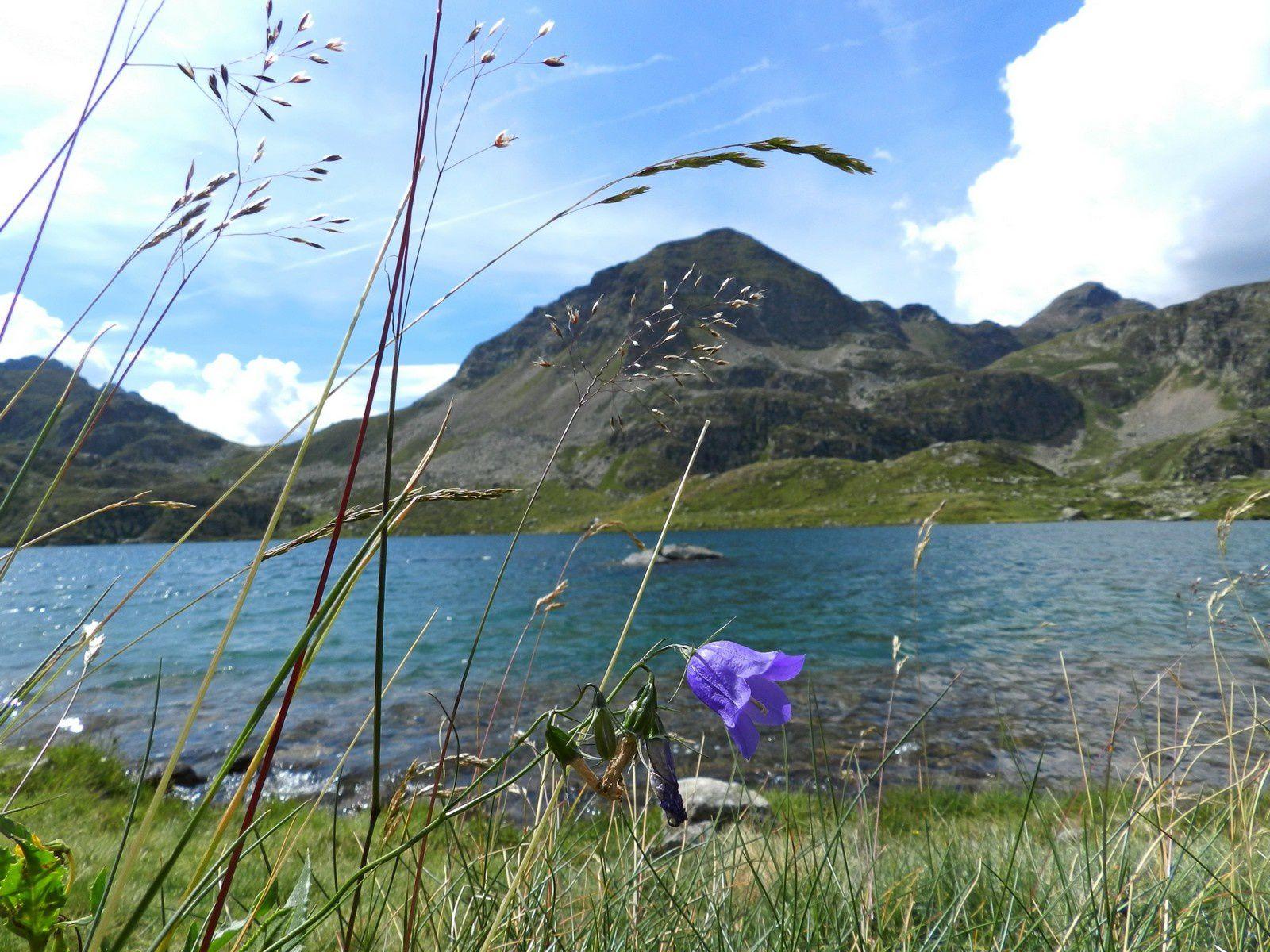 les fleurs autour des étangs de Fontargente