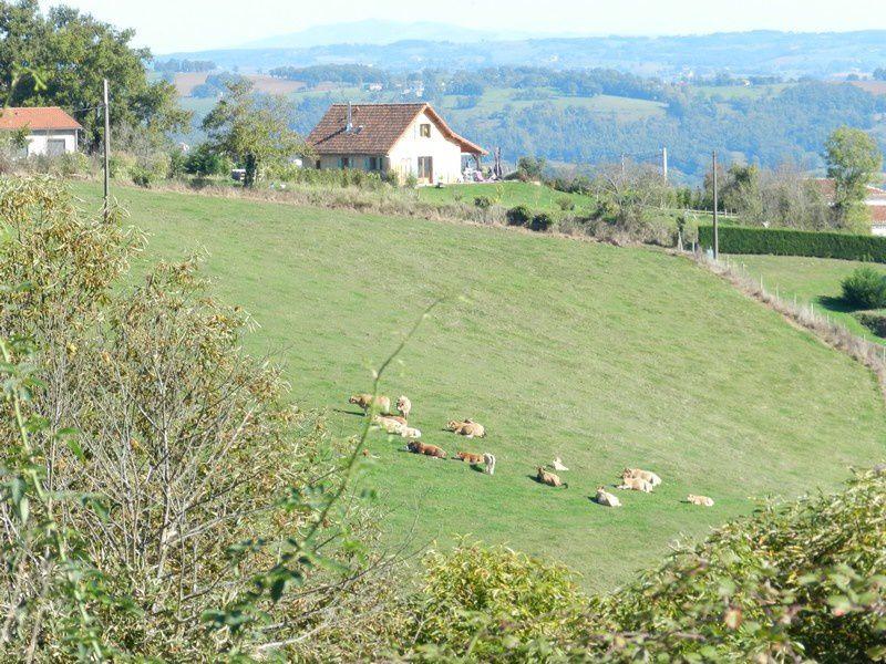 les vaches regarent passer le train des randonneurs