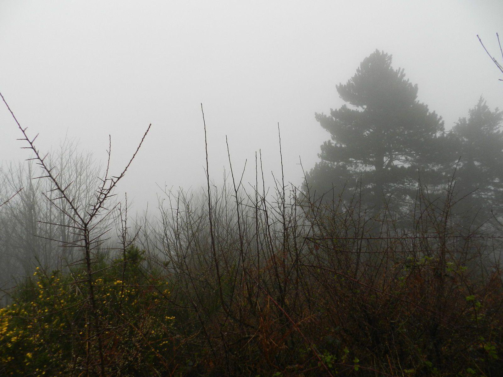 voilà la vue sur Mazamet, nous sommes dans un nuage
