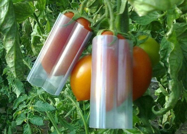 Des légumes en forme