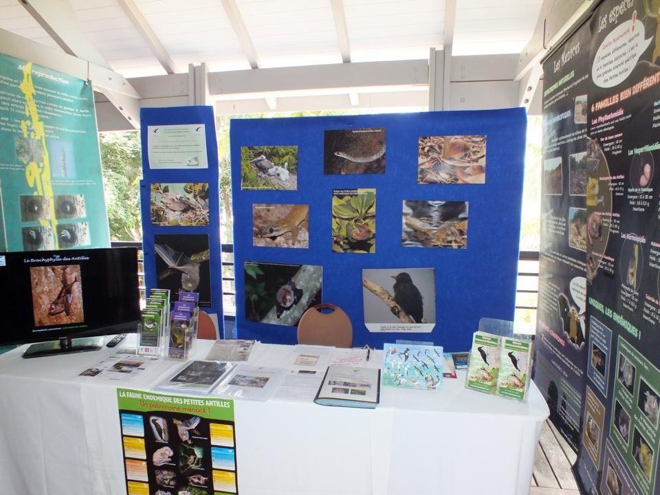 Pic de la Guadeloupe, pélicans bruns nicheurs, chauves-souris, couleuvres, scinques, mabouyas, grenouilles ... tous à l'honneur au stand de l'ASFA !