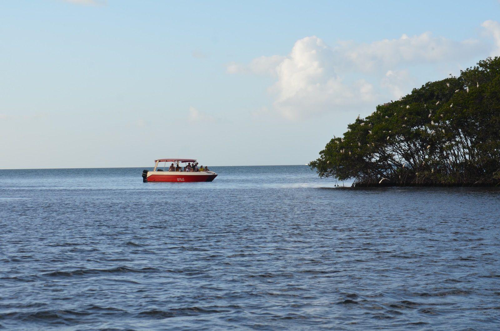 Un bateau trop proche de la colonie d'oiseaux. Le dérangement est le principal facteur de déclin des colonies nicheuses d'oiseaux marins.
