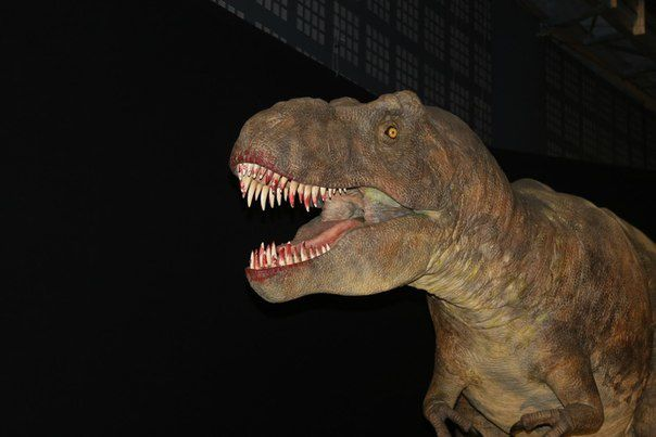 Voyage au Jurassic Park