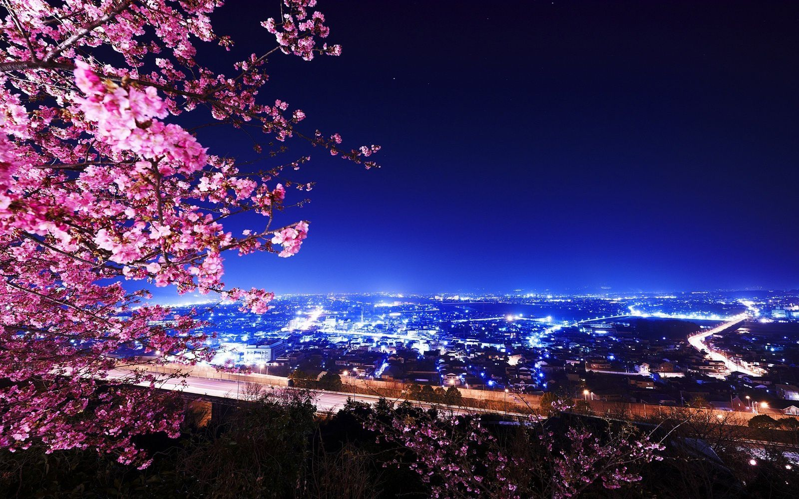 Cerisier Du Japon Ville Nuit Wallpaper Free