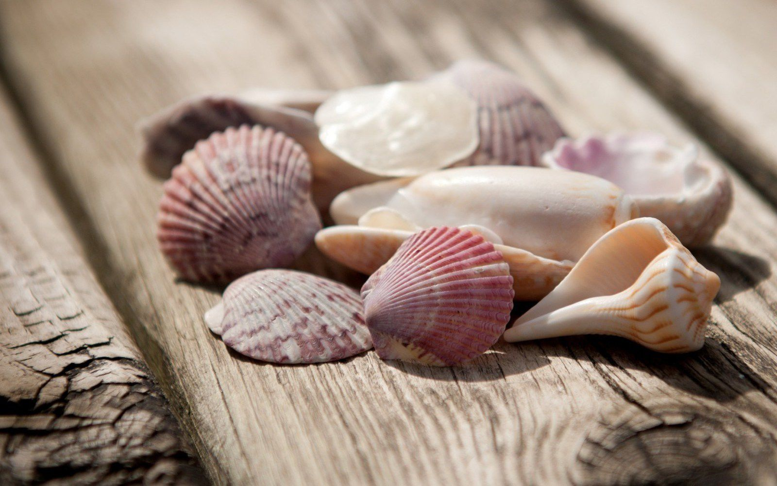 Coquillages - Vacances - Wallpaper