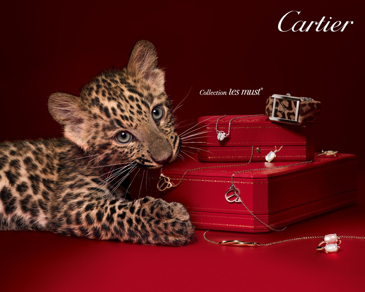 Cartier - Panthère - Wallpapers - HD - Free