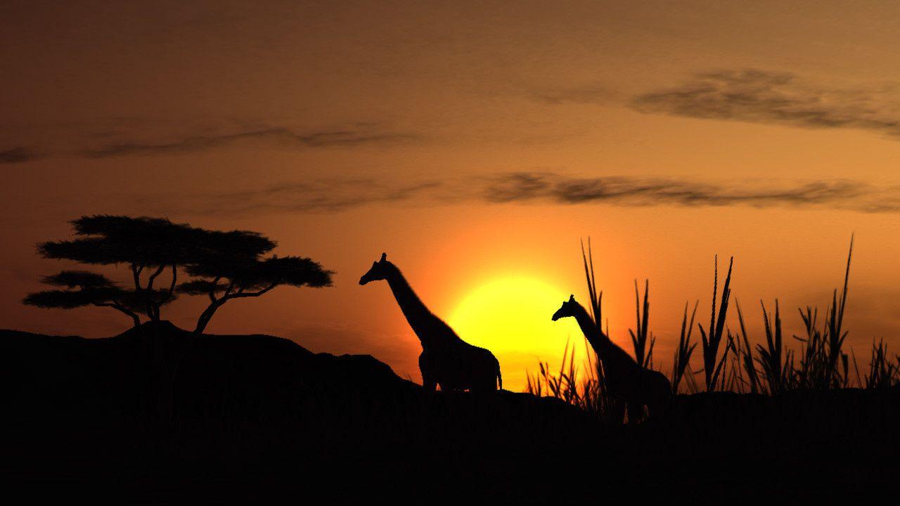 Girafes - Coucher de soleil - Wallpaper - Free
