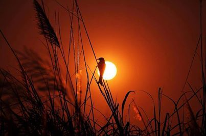 Nature - Oiseau - Soleil - Picture - Free