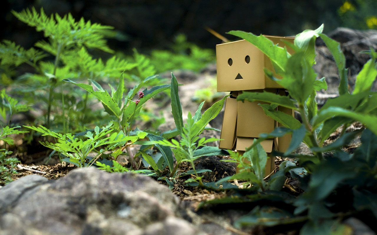 Danbo - Nature - Wallpaper - Free