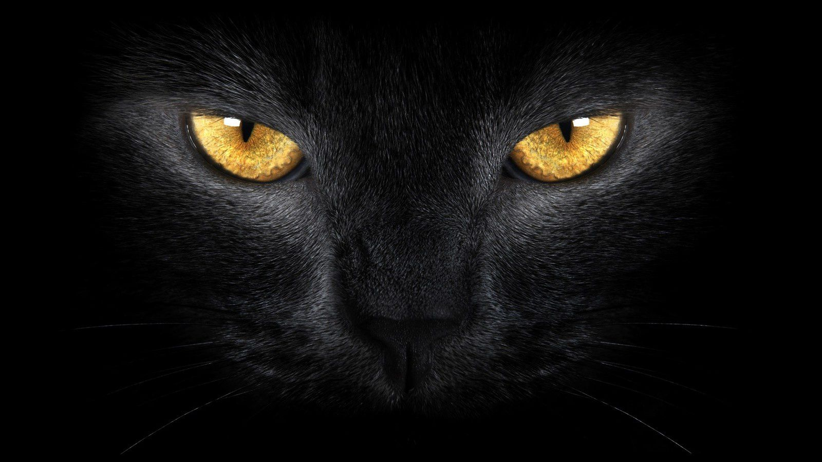 Chat - Noir - Regard - Wallpaper - Free