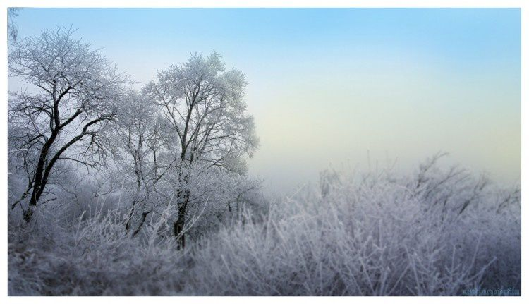Nature - Hiver - Neige - Arbres - Paysage - Picture - Free