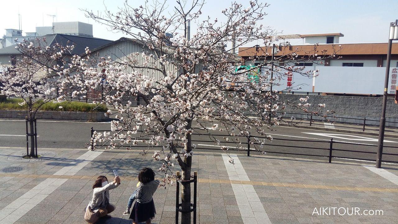 Compte-rendu du voyage aïkido au Japon printemps 2017