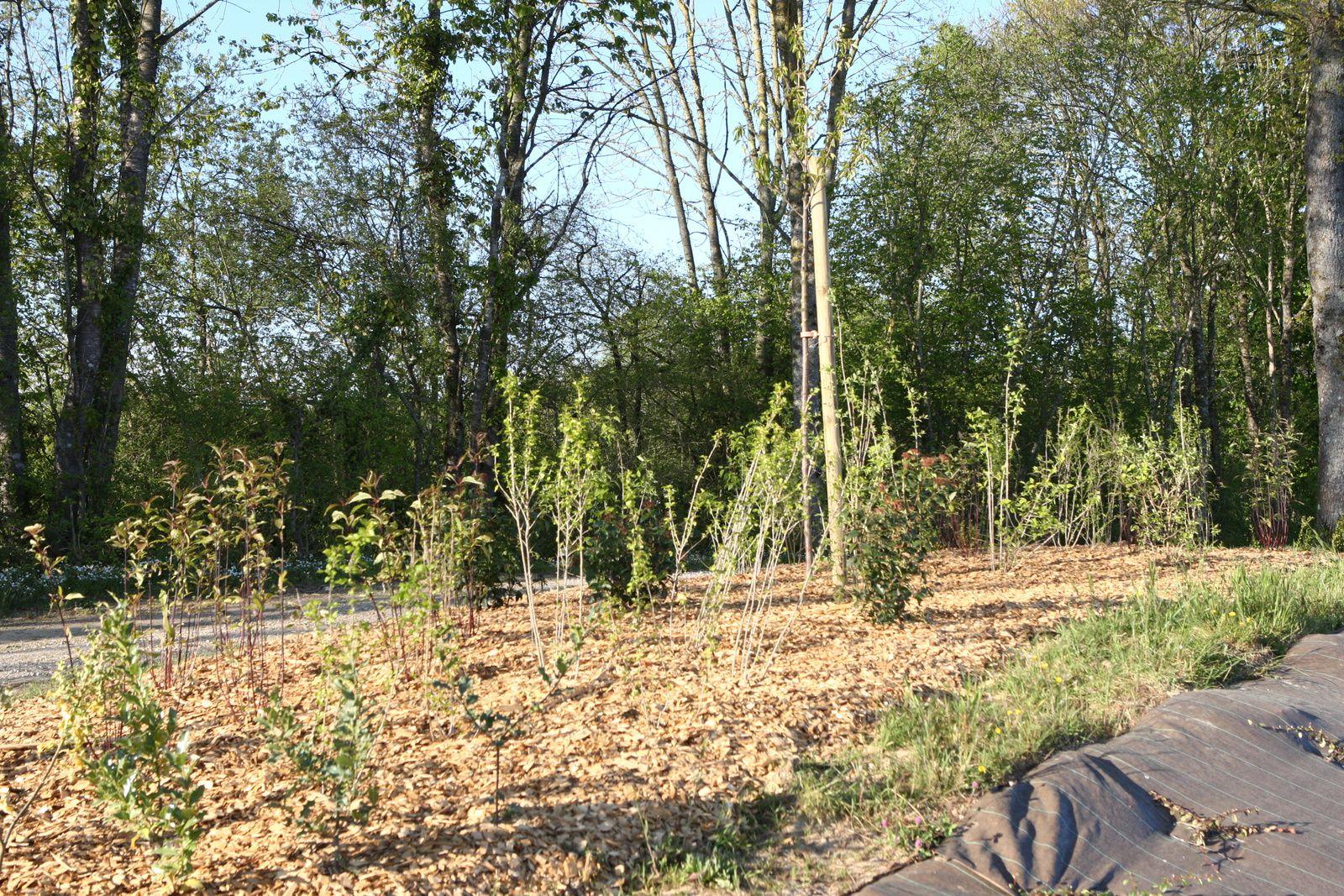"""Lotissement """"La Prairie"""" : les plantations sont faites"""