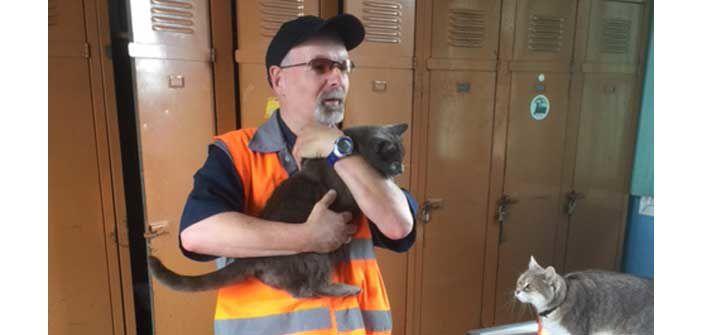 Des chats, mascottes de la gare de Vierzon grâce à Daniel, agent d'entretien dans les wagons
