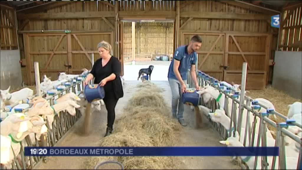 Le Vierzonnais Julien Bard au journal de France 2 pour sa ferme à Bordeaux