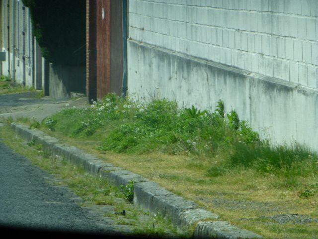 Avec le printemps, le retour des trottoirs poilus !