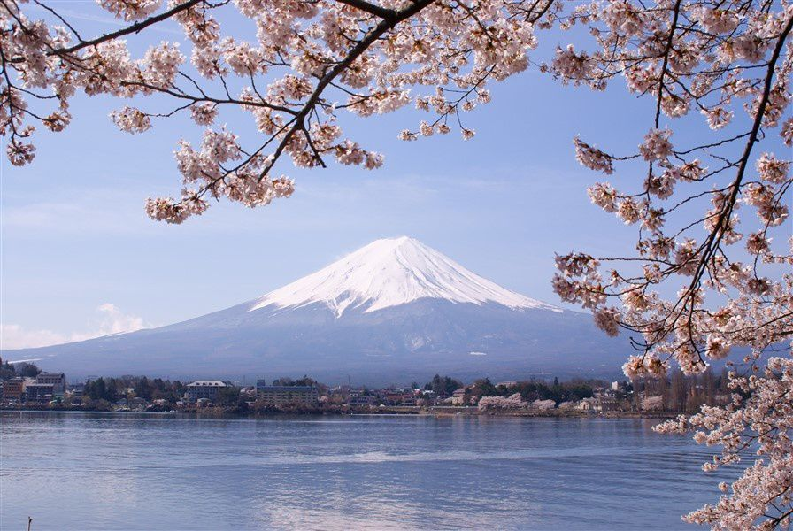 Sakura, lac Kawaguchiko et Mont Fuji