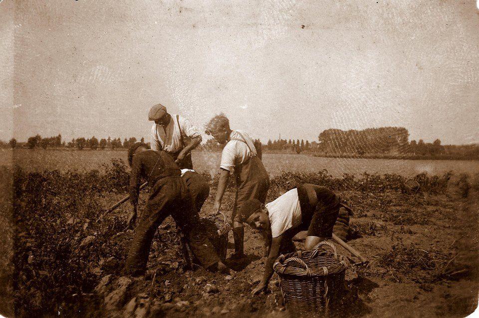 Travail aux champs près de l'ancienne fosse d'Aoust à Aniche en août 1938 - Documents &#x3B; Didier De Cooman.