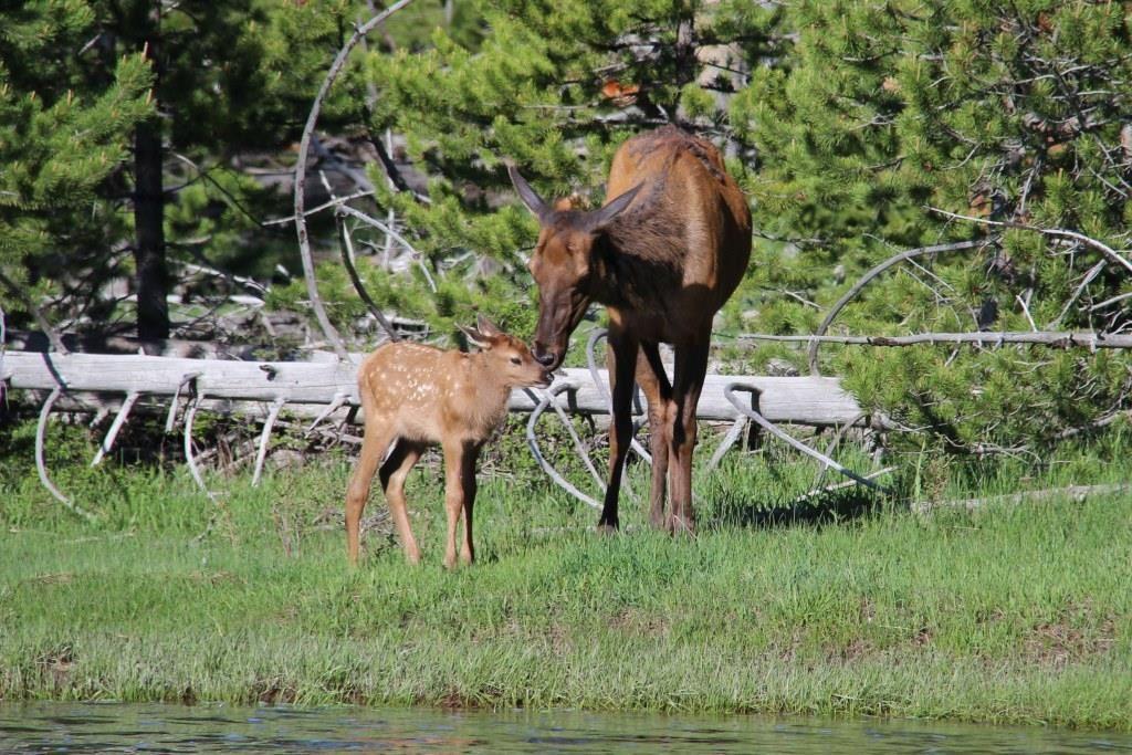 Bambi a retrouvé sa maman !!!