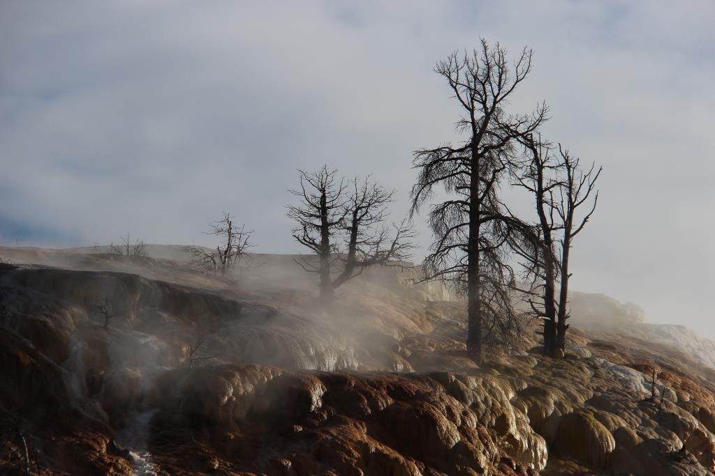 Lili à Yellowstone &amp&#x3B; Grand Téton