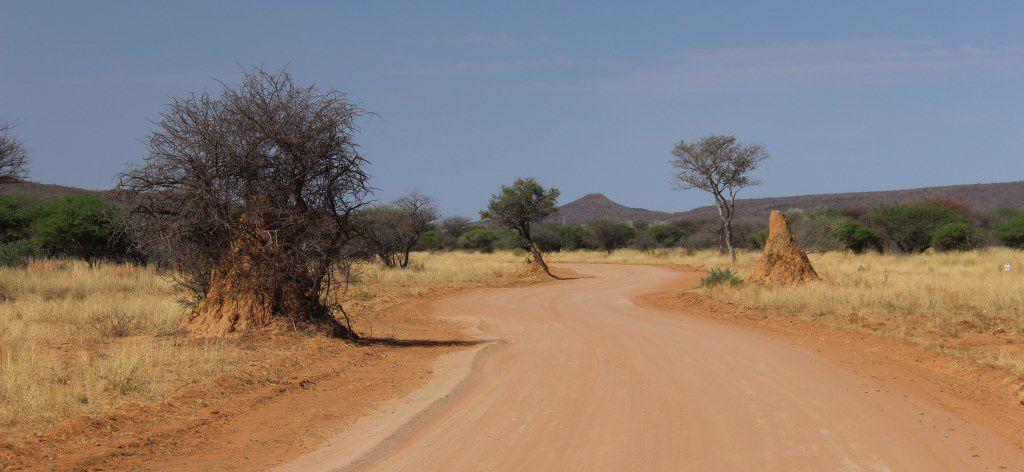 Une des pistes du parc avec ses termitières géantes