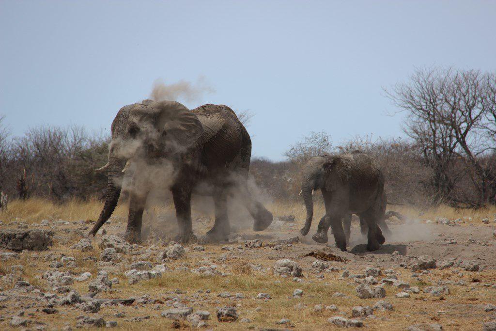 Séance bain de boue pour la famille éléphant