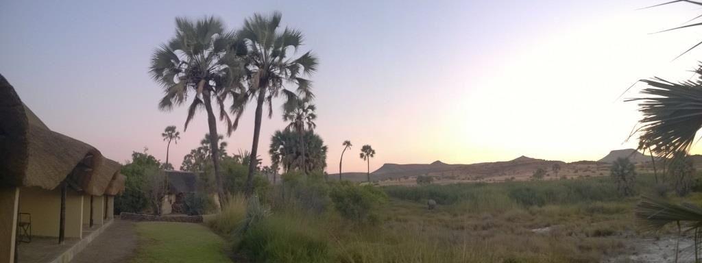 L'oasis de Palmwag et son éléphant du désert en plein repas