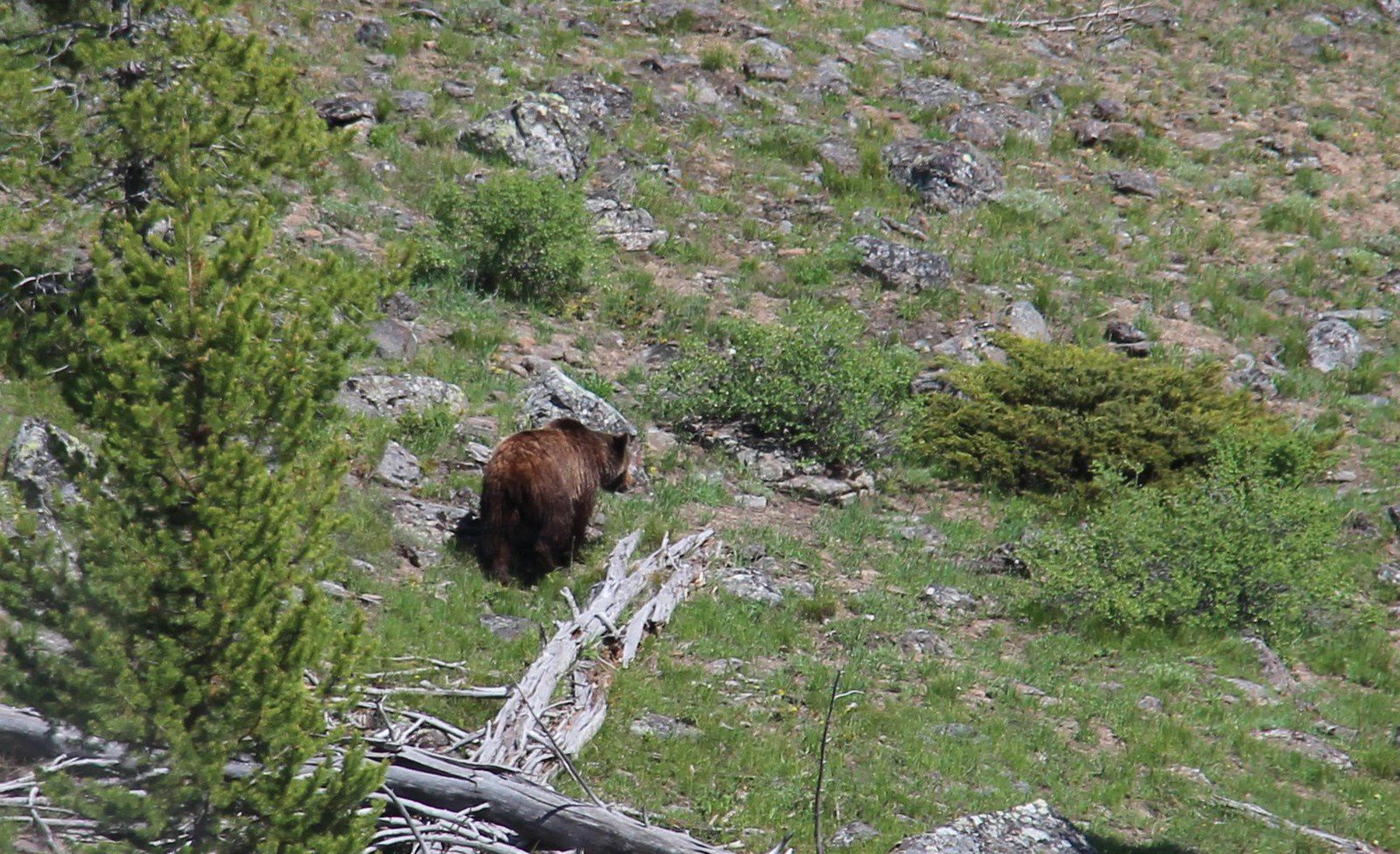 Faune de Yellowstone