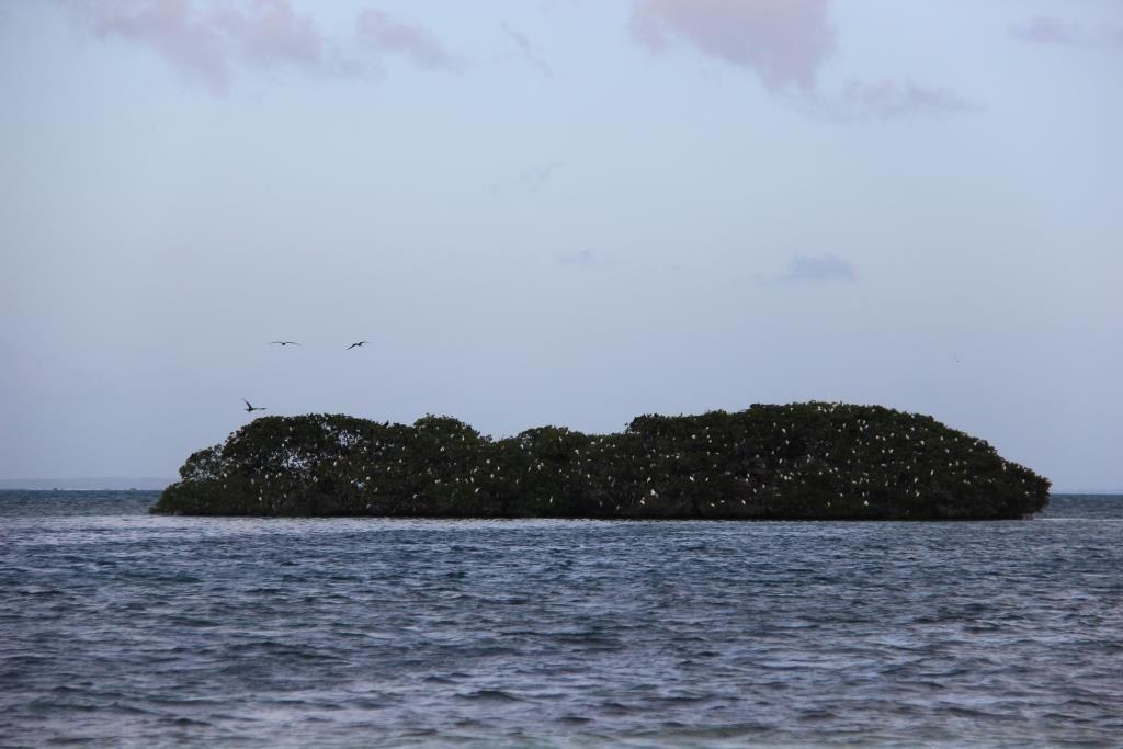 L'îlet Oiseaux