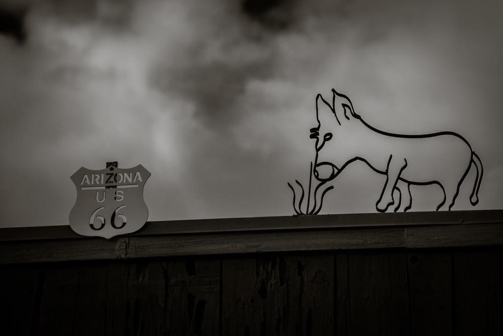 Les ânes d'Oatman