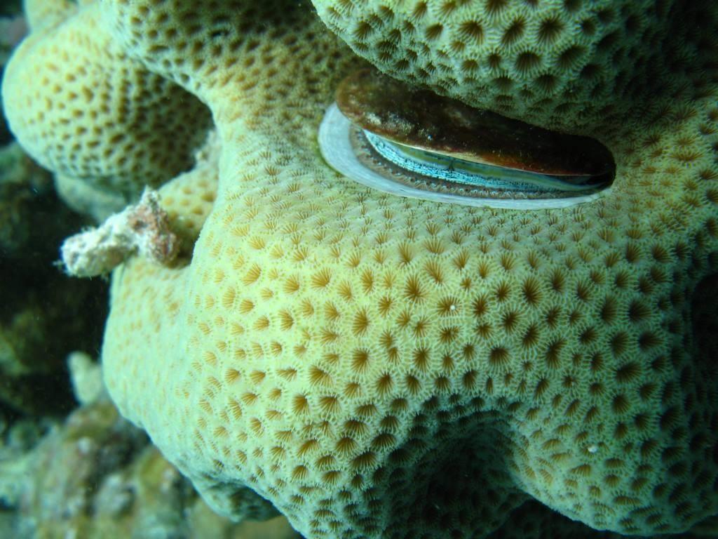 Corail et coquillage