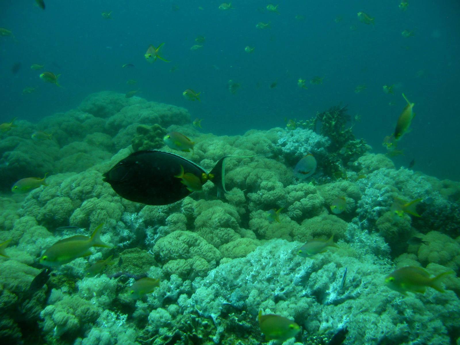 Flore et faune variées sur le site de Divers Heaven à Balicasag