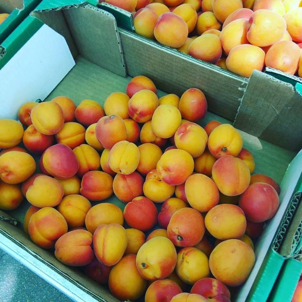Clafoutis aux abricots sans gluten au sucre Muscovado équitable à 4 mains .