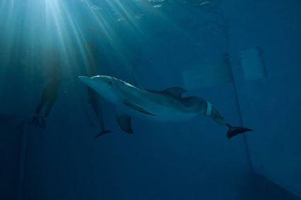 ClearWater marine  acquaruim