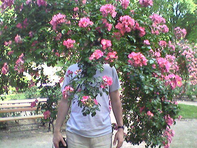 Poète à la rose - Photo © Serpil Çökelik - DR