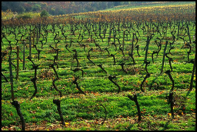 (Wineyards © Mike Long Photography)