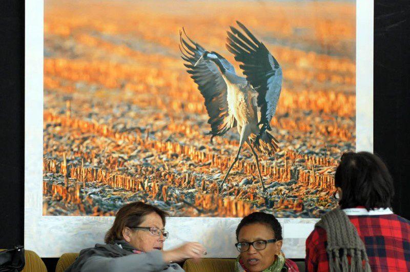FIFO 2012 photos détournées d'oiseaux