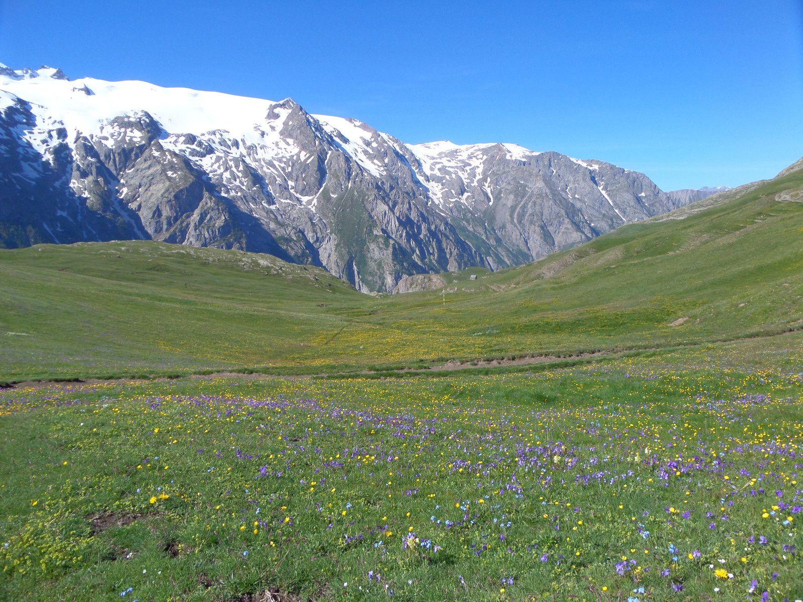 Départ du Chazelet (1770m) et montée sur le Plateau d'Emparis couvert de fleurs jusqu'au Lac Lérié (2387m)