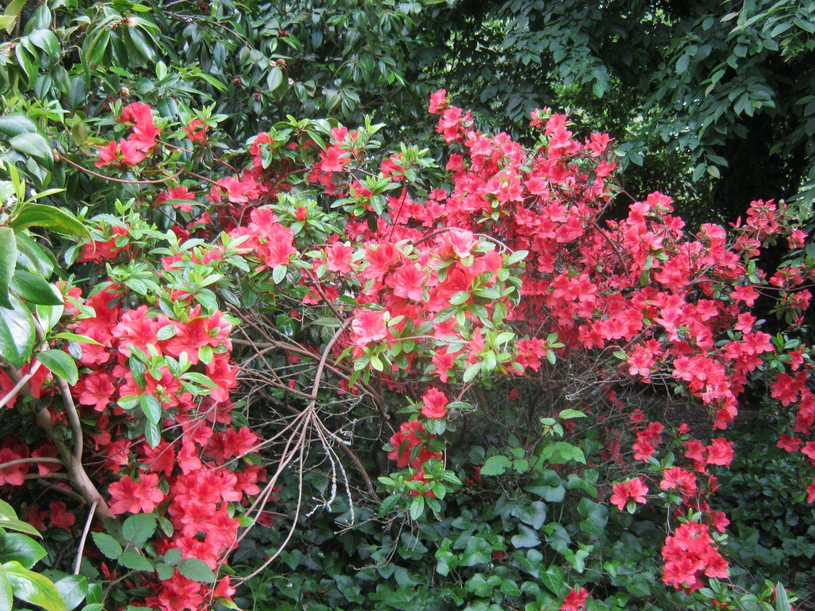des rhododendrons, des azalées, des boutons d'or et des orchidées sauvages