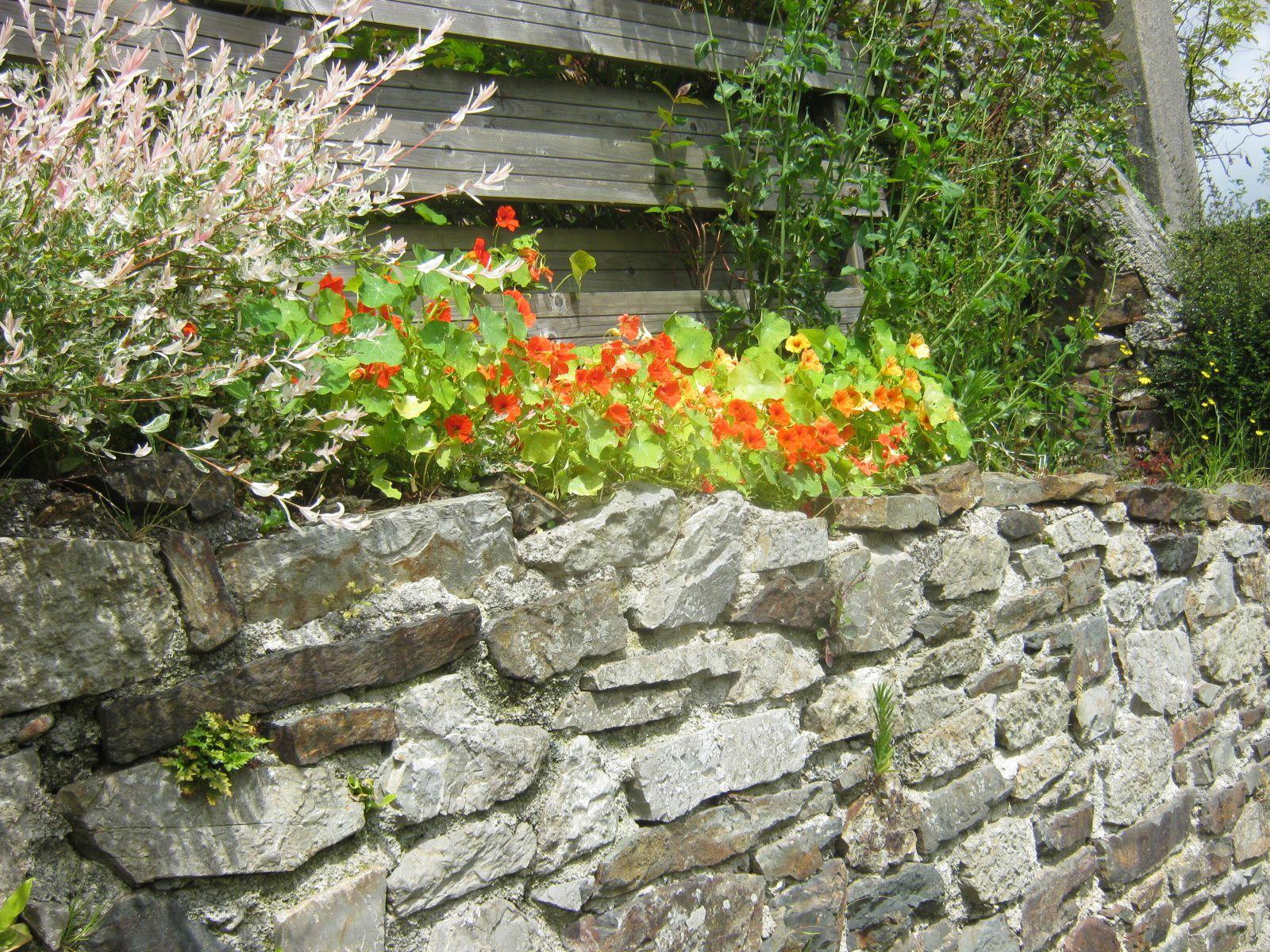 De belles clôtures fleuries à Landevennec ? 1ère photo, millepertuis (merci Evelyne)
