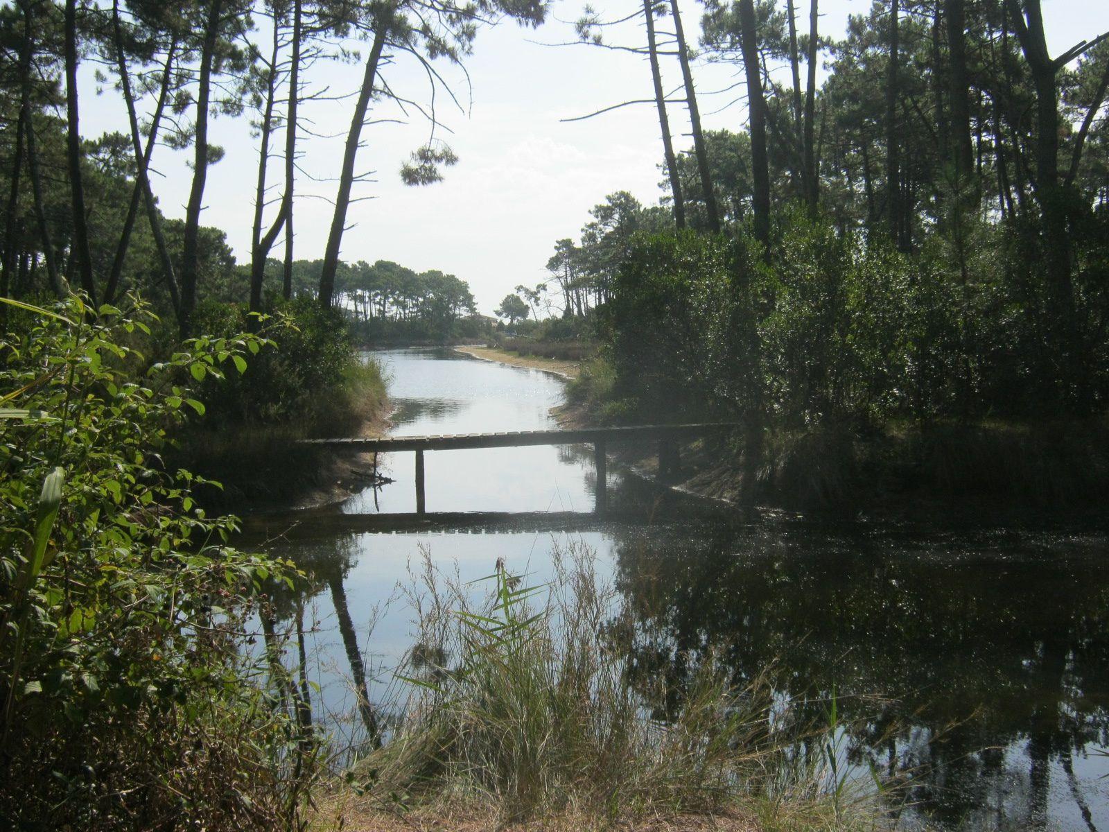 1ère photo, entre les arbousiers et d'autres réservoirs. Il fait trop chaud pour les oiseaux à midi, on ne verra qu'une aigrette en plein vol