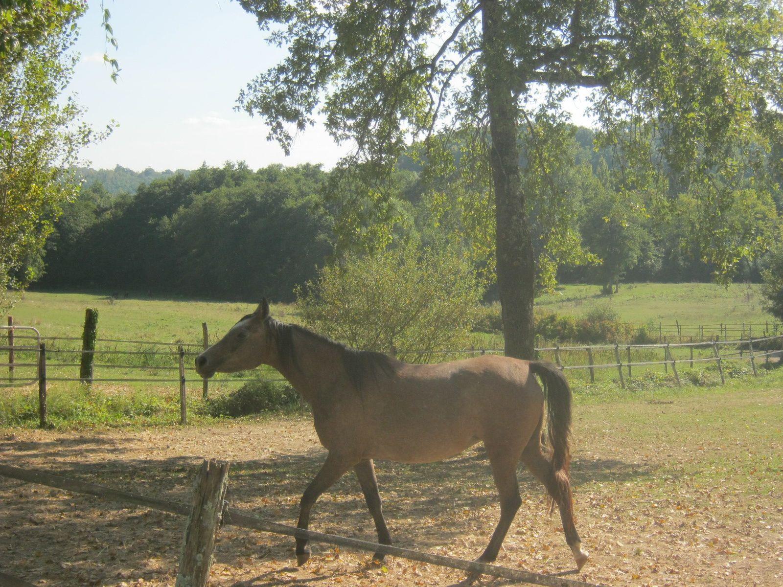 Un beau toutou et des chevaux