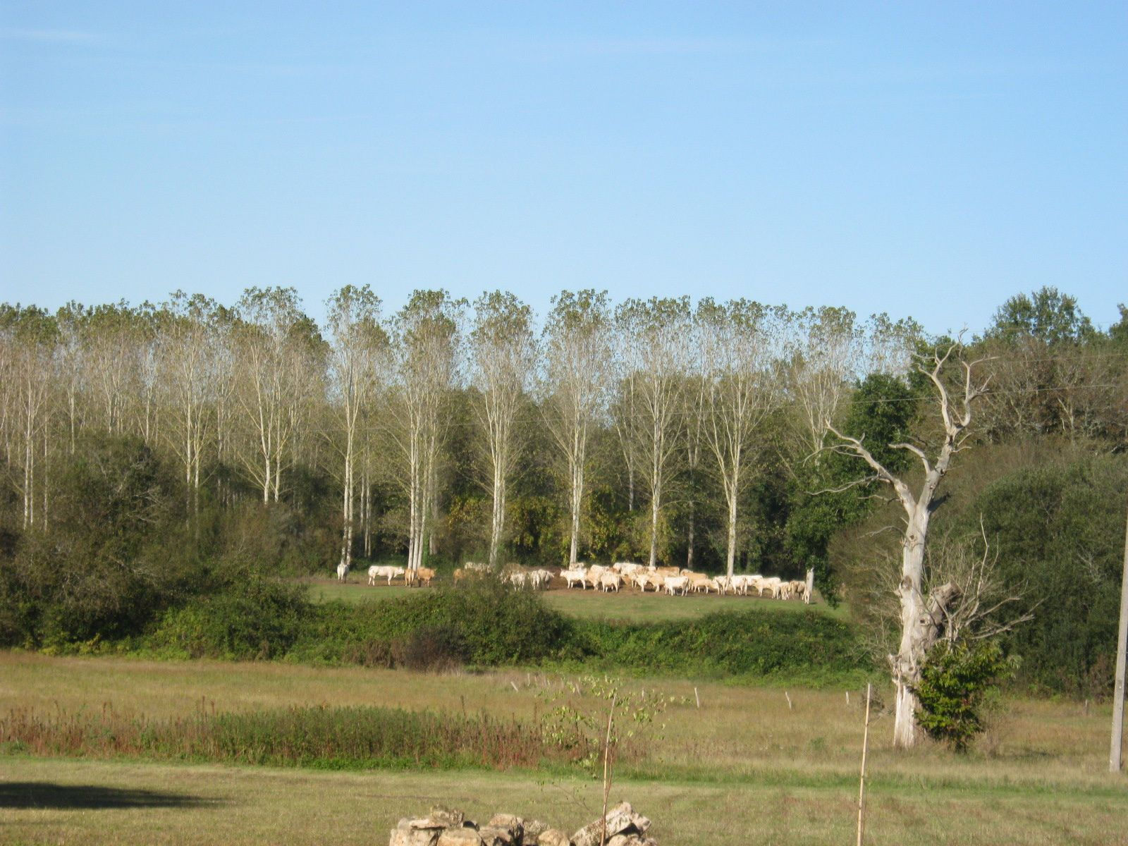 un beau troupeau au loin