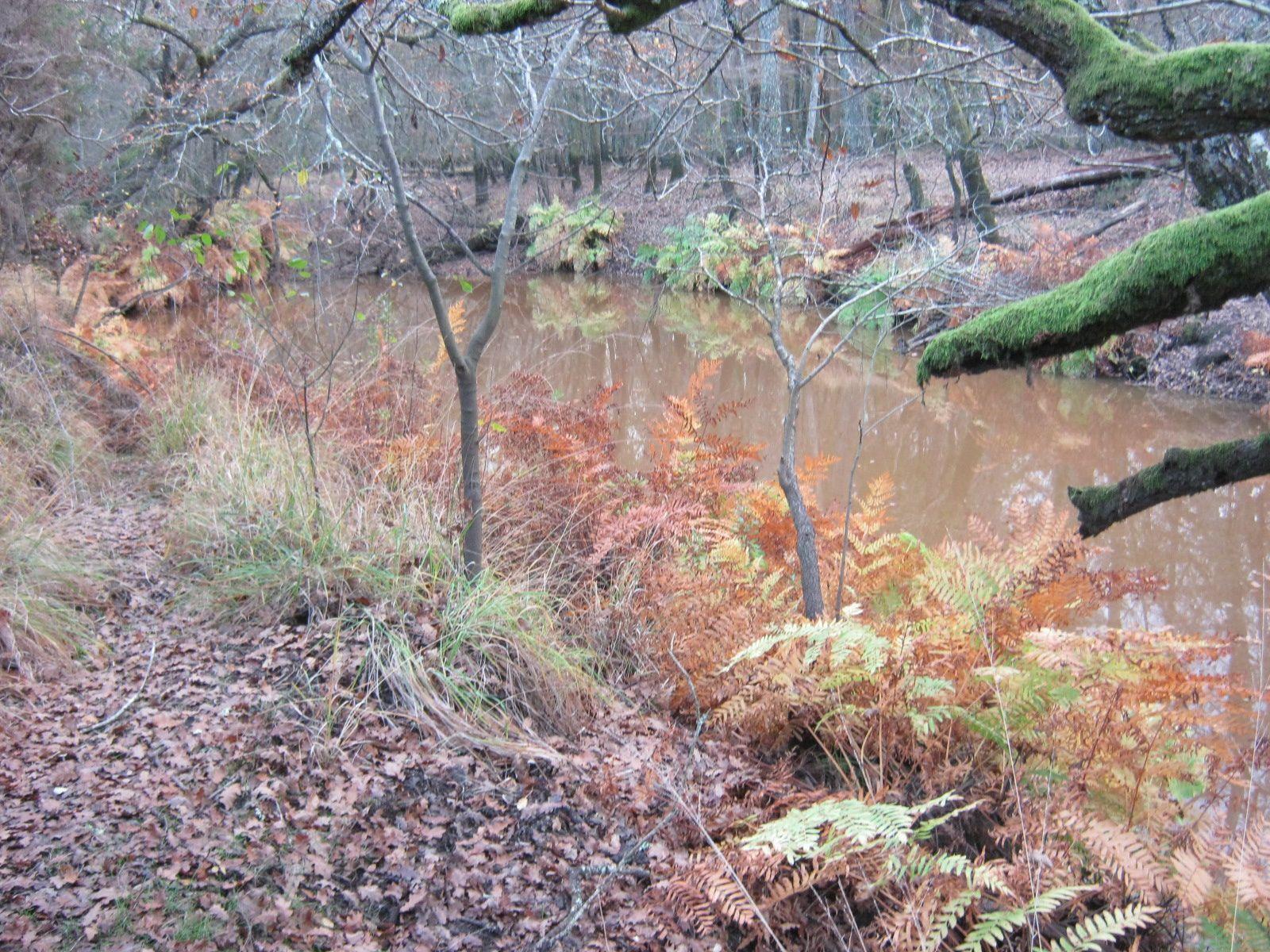 la belle osmonde royale a pris ses belles couleurs de l'automne