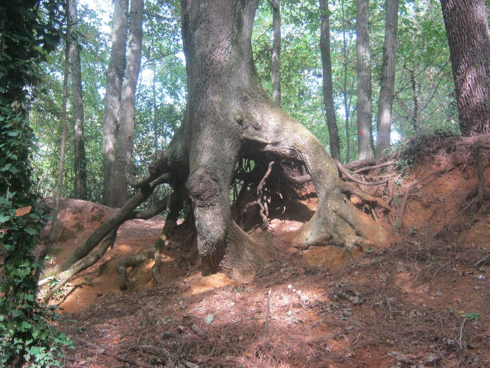 arbres racines