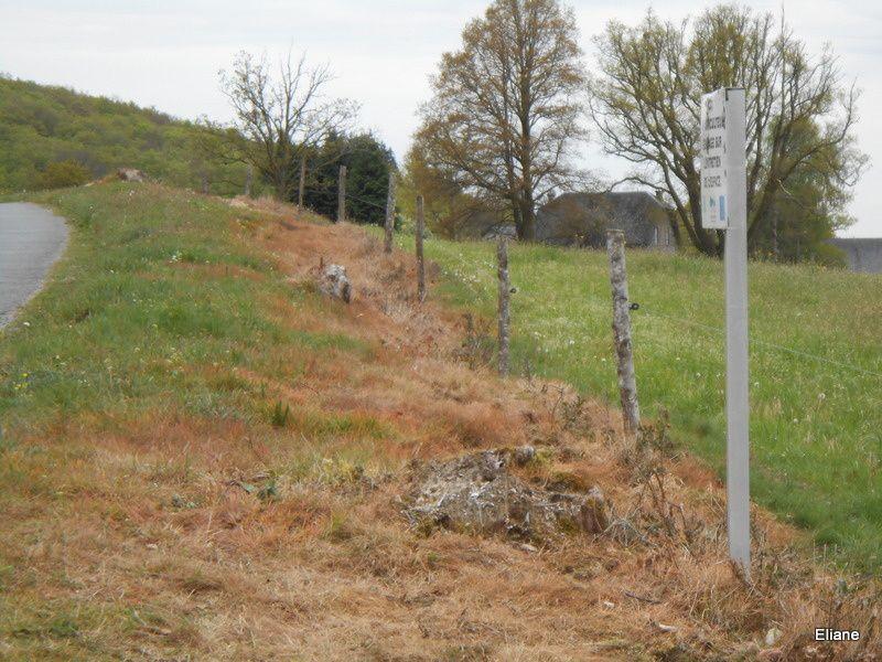 Acte de vandalisme autour du Chêne de Sully