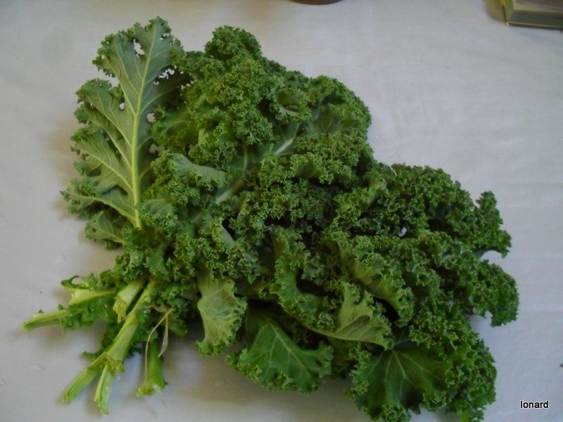 Le chou kale